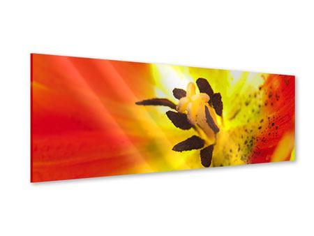 Acrylglasbild Panorama Die Narbe einer Tulpe XXL