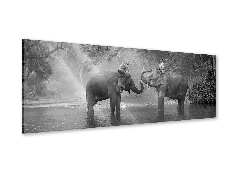 Acrylglasbild Panorama Zwei Elefanten
