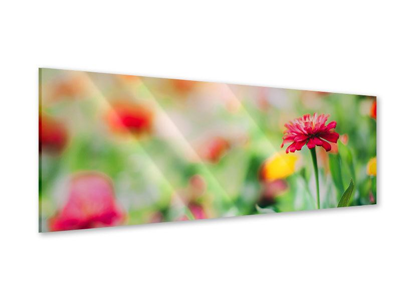 Acrylglasbild Panorama Im Blumengarten