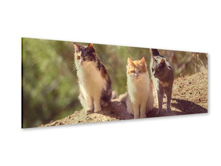 Acrylglasbild Panorama Katzen im Garten