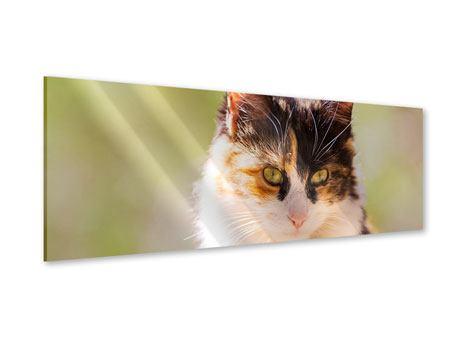 Acrylglasbild Panorama Katzenbesuch