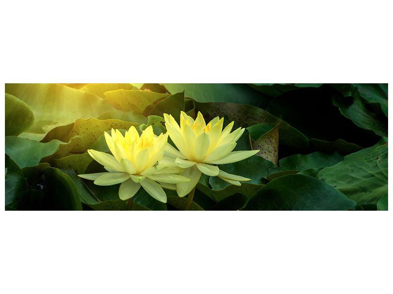 Acrylglasbild Panorama Wilde Lotus