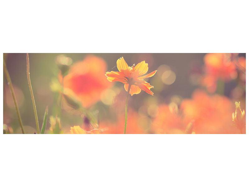 Acrylglasbild Panorama Blütenpracht