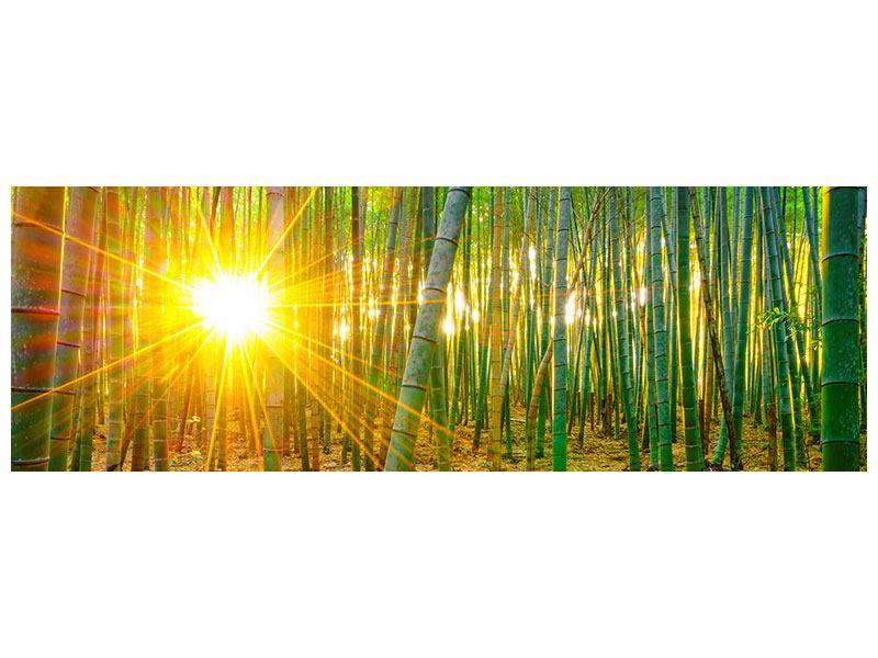 Acrylglasbild Panorama Bambusse