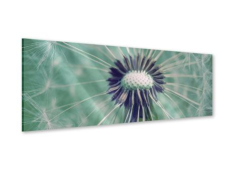 Acrylglasbild Panorama Close Up Pusteblume