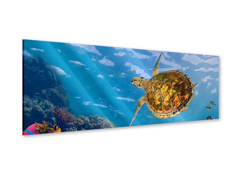 Acrylglasbild Panorama Die Wasserschildkröte