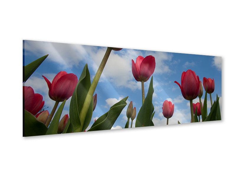 Acrylglasbild Panorama Tulpen im Himmel