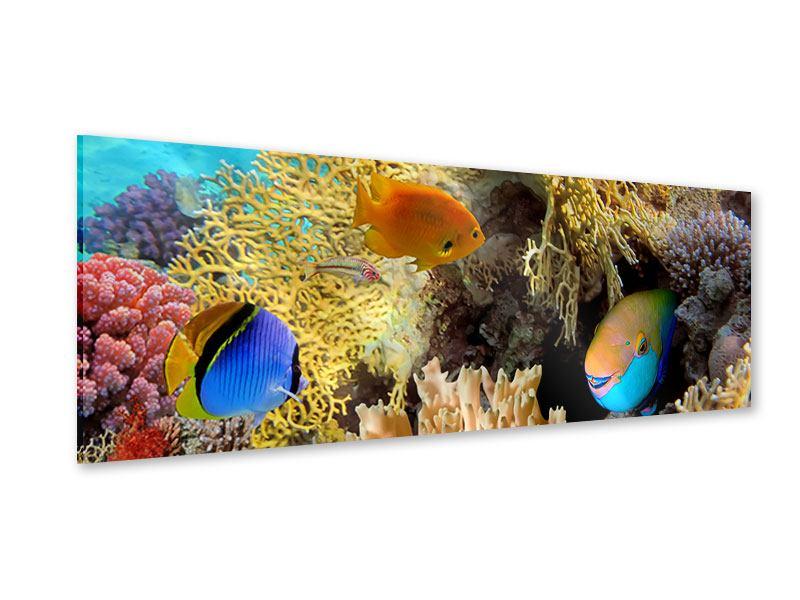 Acrylglasbild Panorama Fischreichtum
