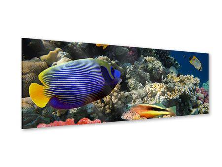 Acrylglasbild Panorama Das Aquarium