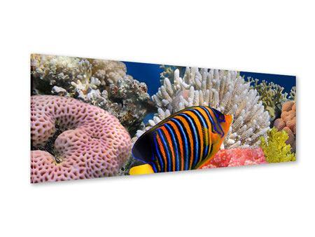Acrylglasbild Panorama Mit den Fischen tauchen