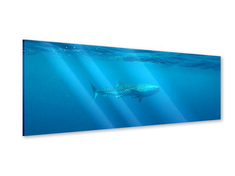 Acrylglasbild Panorama Der Walhai