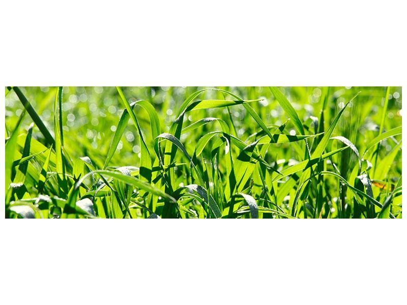 Acrylglasbild Panorama Sonniges Gras