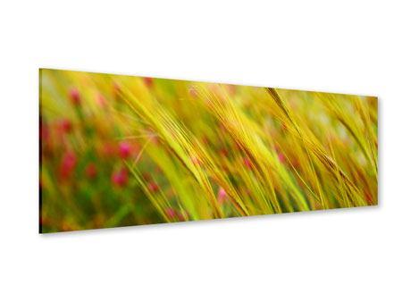 Acrylglasbild Panorama Das Weizenfeld