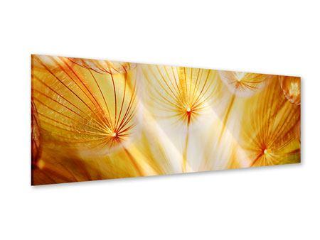 Acrylglasbild Panorama Close Up Pusteblume im Licht