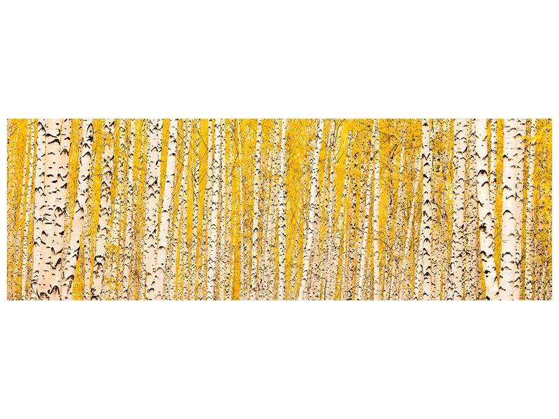 Acrylglasbild Panorama Der Birkenwald im Herbst