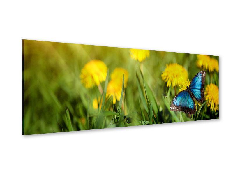 Acrylglasbild Panorama Der Löwenzahn und der Schmetterling