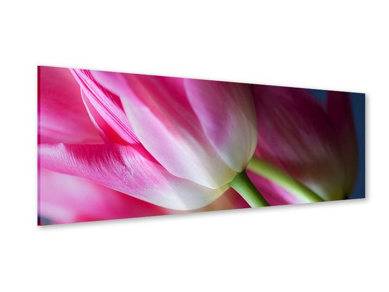 Acrylglasbild Panorama Makro Tulpen