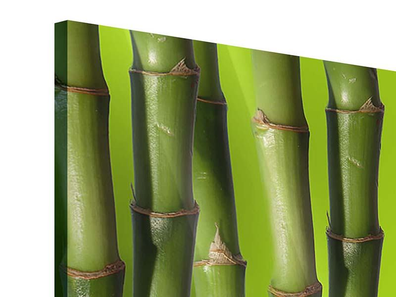 Acrylglasbild Panorama Der Bambus