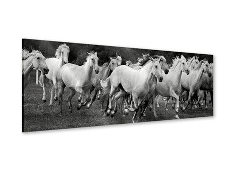 Acrylglasbild Panorama Die Mustang Herde