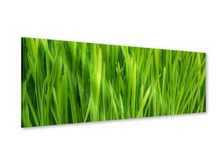 Acrylglasbild Panorama Grashalme im Morgentau