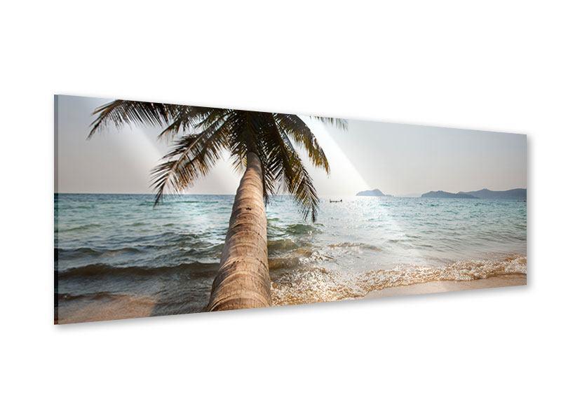 Acrylglasbild Panorama Palme
