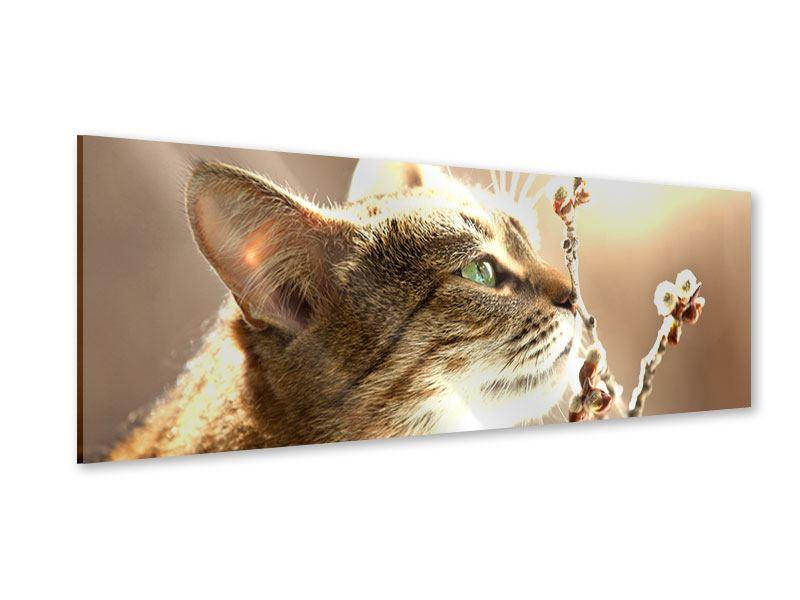Acrylglasbild Panorama Die Katze