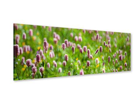Acrylglasbild Panorama Der Wiesenklee