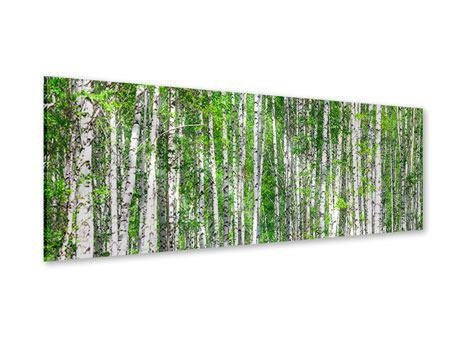 Acrylglasbild Panorama Der Birkenwald
