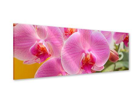 Acrylglasbild Panorama Königliche Orchideen