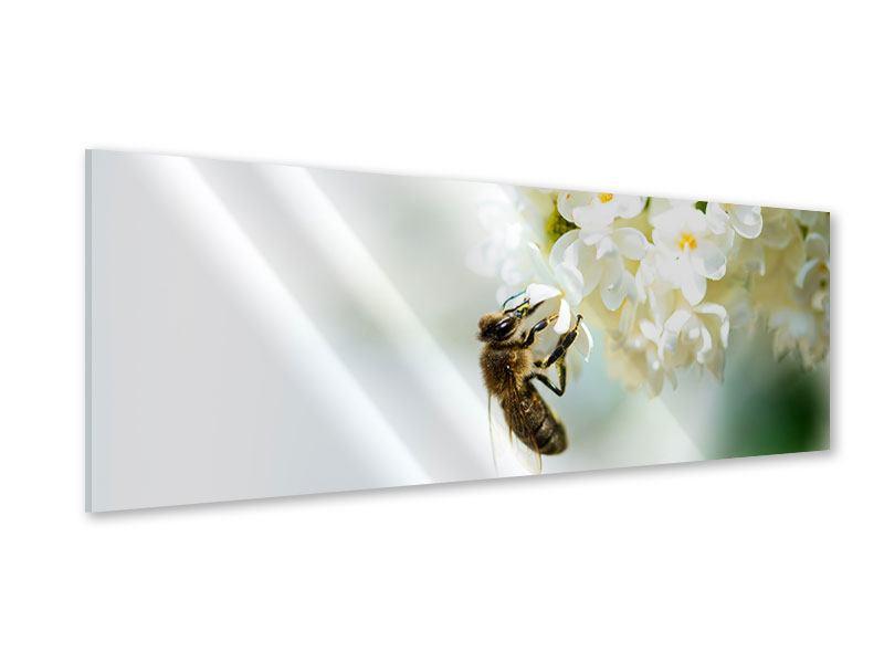 Acrylglasbild Panorama Die Hummel und die Blüte