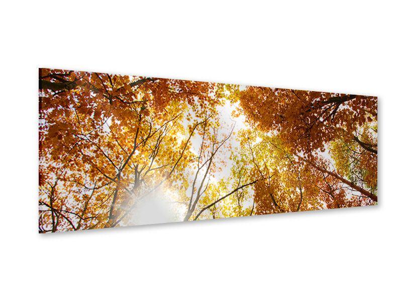 Acrylglasbild Panorama Herbstbäume