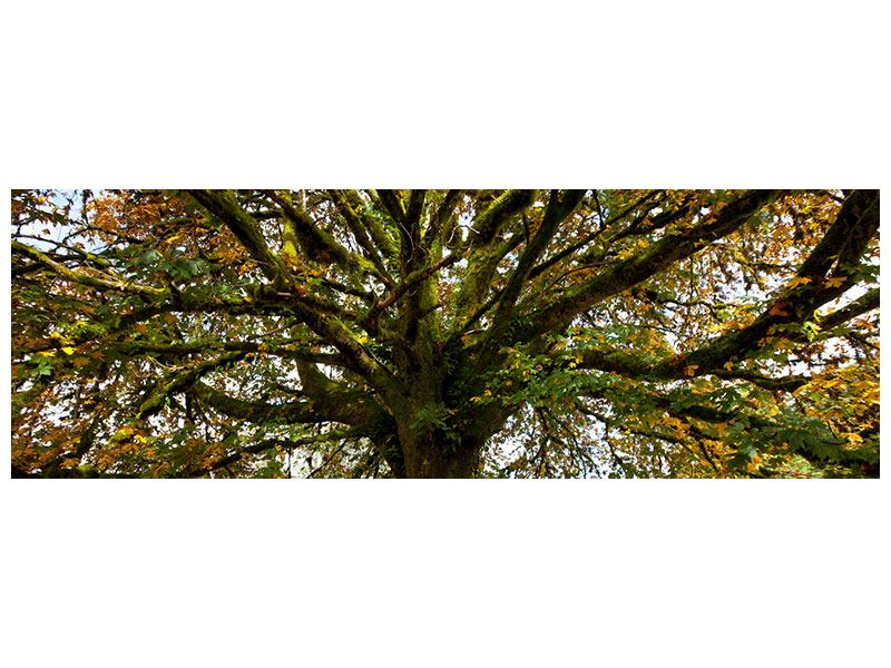 Acrylglasbild Panorama Mein Lieblingsbaum