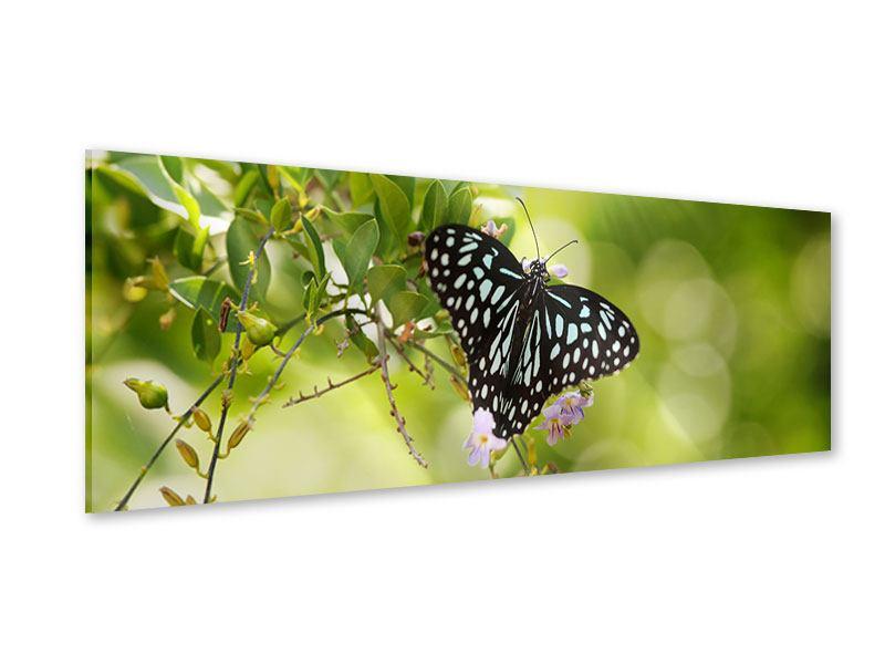 Acrylglasbild Panorama Papilio Schmetterling XXL