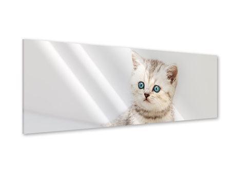 Acrylglasbild Panorama Katzenbaby