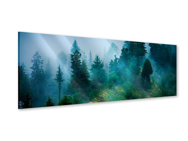Acrylglasbild Panorama Geheimnisvoller Wald