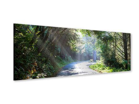 Acrylglasbild Panorama Sonniger Waldweg