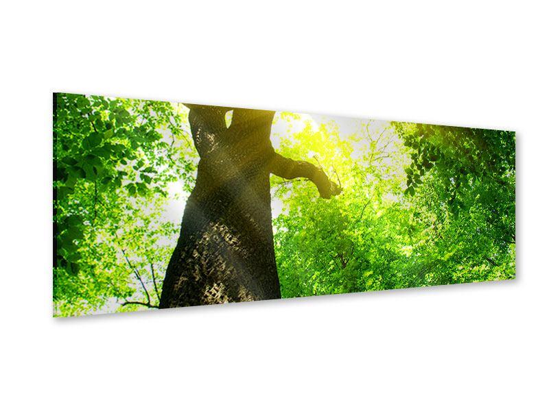 Acrylglasbild Panorama Baum