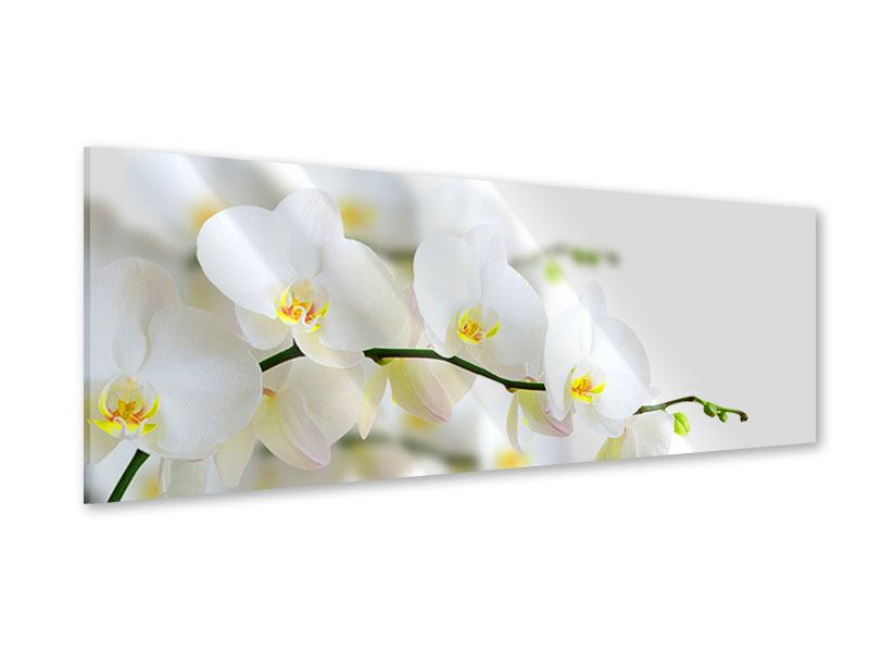 Acrylglasbild Panorama Weisse Orchideen
