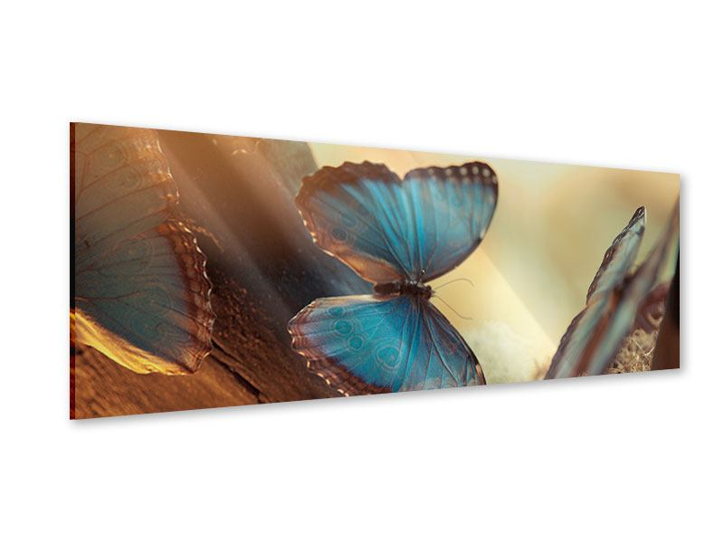 Acrylglasbild Panorama Schmetterlinge