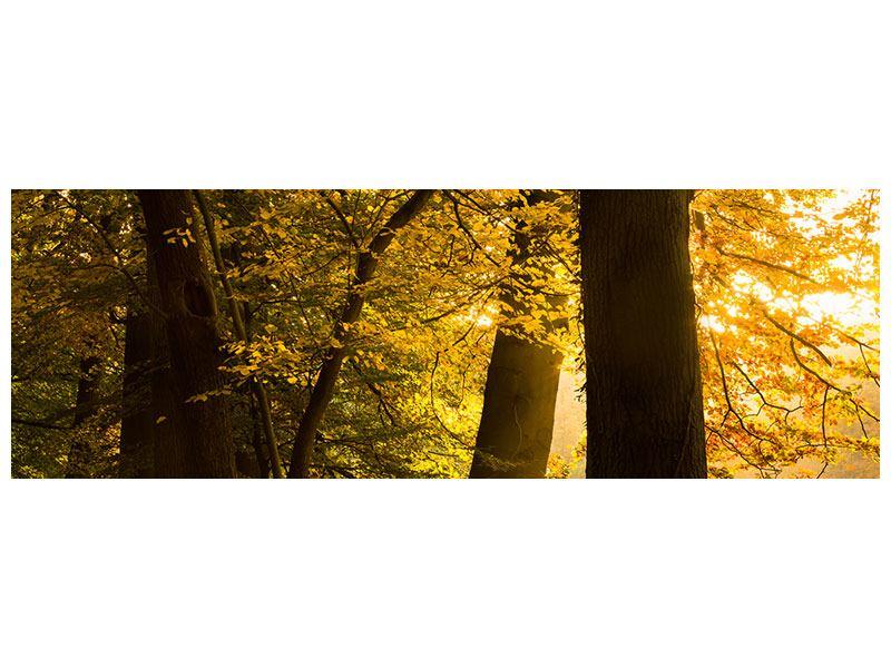 Acrylglasbild Panorama Herbstlaub