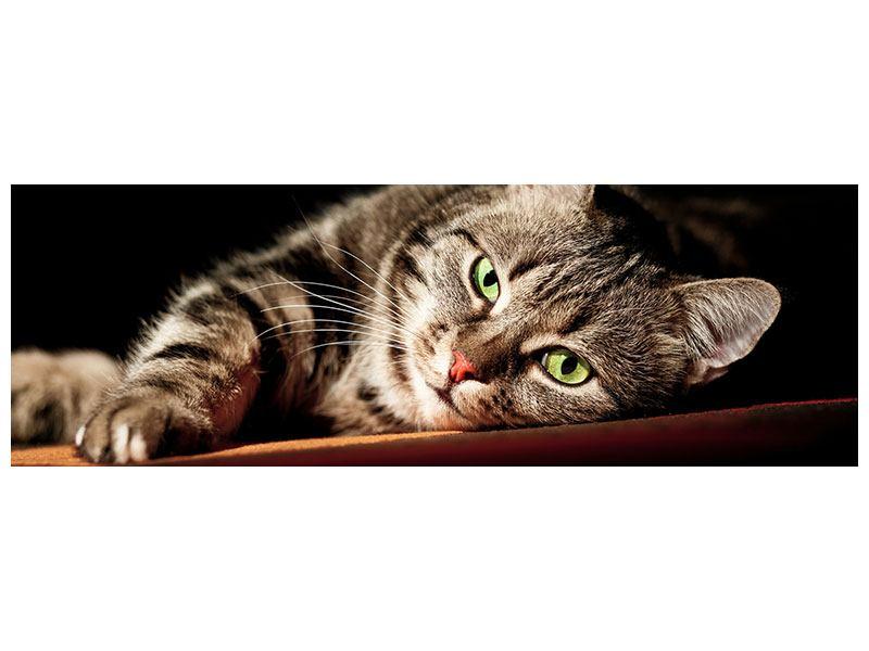Acrylglasbild Panorama Entspannte Katze