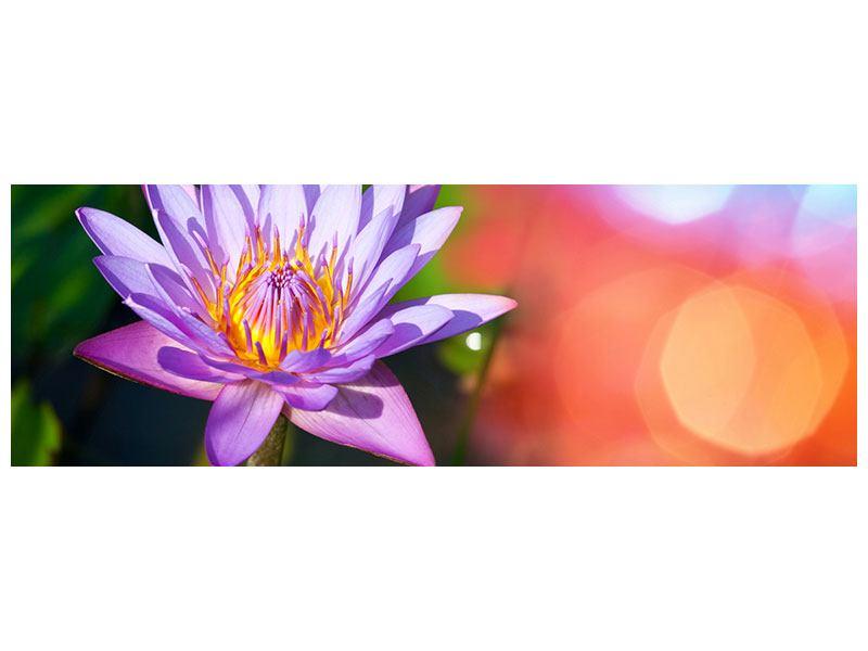 Acrylglasbild Panorama Colored Lotus