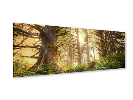 Acrylglasbild Panorama Sonnenuntergang im Dschungel