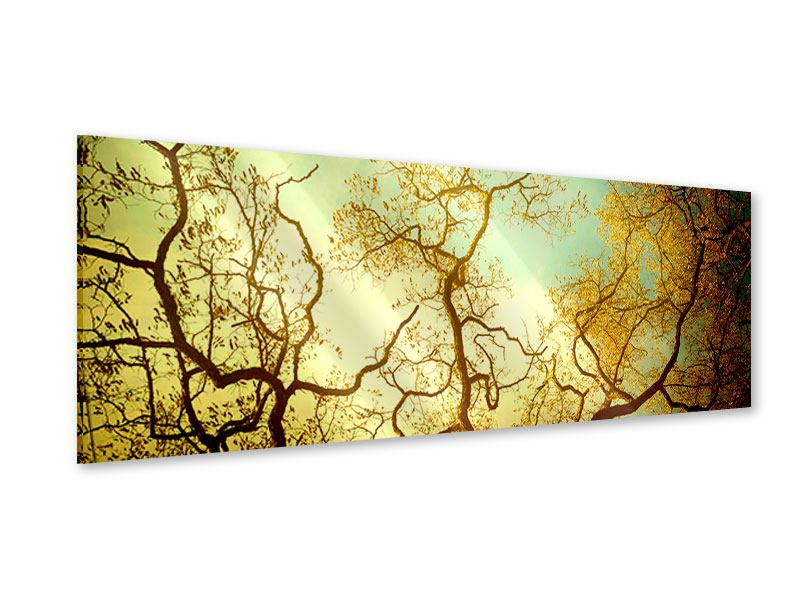 Acrylglasbild Panorama Bäume im Herbst