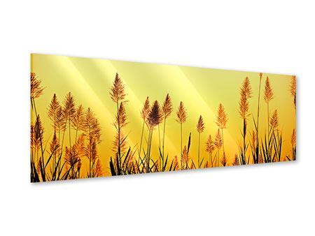 Acrylglasbild Panorama Die Blumen des Feldes