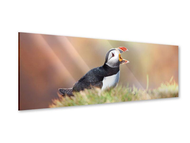 Acrylglasbild Panorama Der Papageitaucher