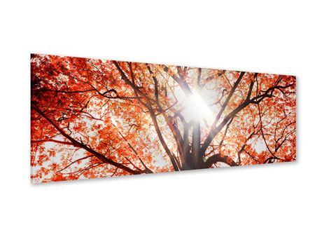 Acrylglasbild Panorama Herbstlicht
