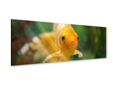 Acrylglasbild Panorama Der Fisch