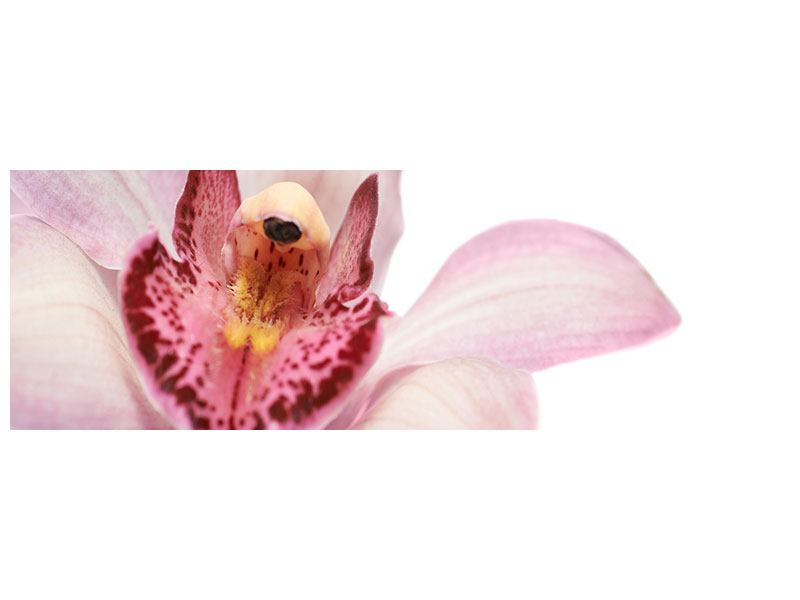 Acrylglasbild Panorama Orchideenblüte XXL