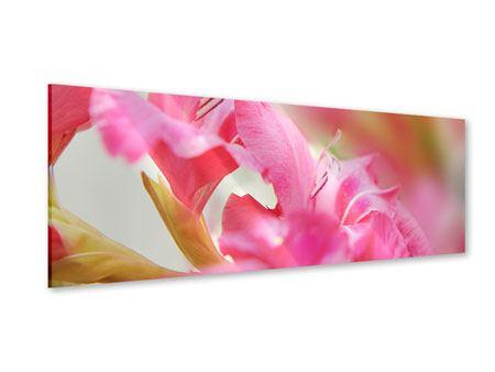 Acrylglasbild Panorama Gladiolen